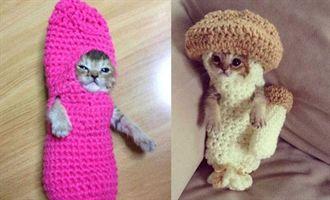 穿菇菇毛衣療傷 小貓萌樣吸睛