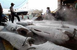月薪18萬 漁民搶雇武裝傭兵抗海盜