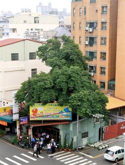 護老樹、28層樓不蓋了!建商退3億訂金