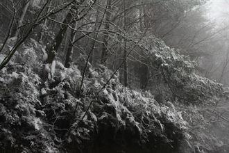 寒流來襲 武陵農場今晨降第一道雪