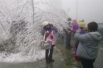 太平山降初雪 近千人上山賞美景