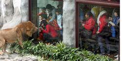 壽山動物園獅、鳥園啟用 餵食秀吸睛