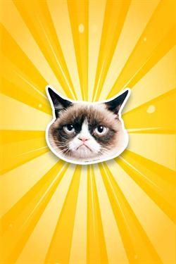 嫌照片不夠搞笑?那就讓臭臉貓一起入鏡吧!