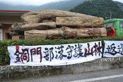 銅門部落「護樹」成功  林務局讓樹留在部落