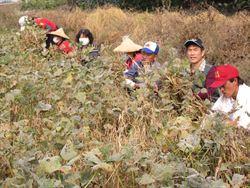 萬丹志工 紅豆自種自賣濟貧