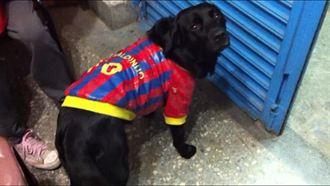 小狗竟穿球衣  跟住破獲地下簽賭站