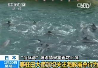 海豚灣屠殺行動 又將開始
