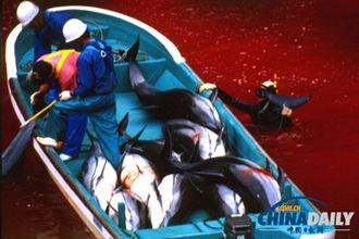 捕獵海豚合理化 日駁美大使