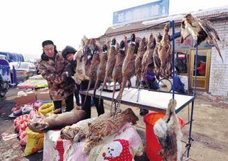 陸農村非法販賣二級保護動物豹貓
