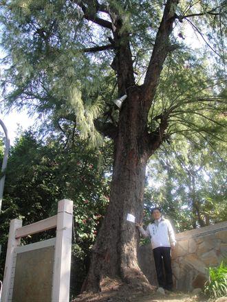 清水公園移樹72棵 議員籲刀下留樹