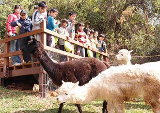 壽山動物園新嬌客 羊駝梅花鹿吸睛