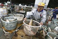 年味近了 魚批發市場湧人潮