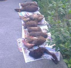 六龜分局查獲盜獵 多隻保育動物遇害