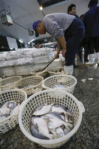 年節備白鯧魚 1公斤最貴要千元