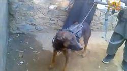 神學士:俘獲美國軍犬