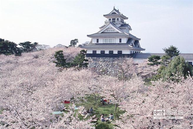 日本櫻花即將綻放,各地均有不同美景。(日本交流協會台北事務所提供)