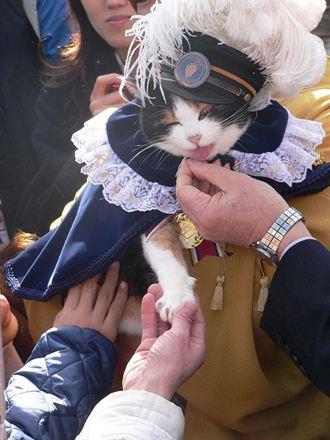 日本高人氣貓站長  化身「招愛情貓」