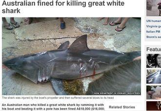 澳男虐殺年幼大白鯊 判罰48萬台幣