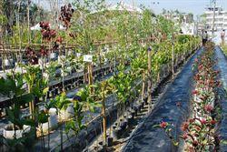 高市社區園藝行開張 免費送樹苗