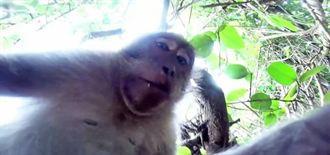 大玩自拍!印尼獼猴偷攝錄影機