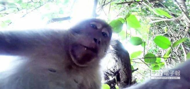 印尼峇里島獼猴偷走一部攝錄影機大玩自拍,留下令人莞爾的畫面。(截自YouTube網頁的畫面)