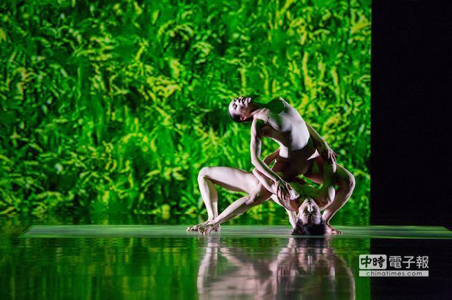 《稻禾》海外首演,台灣稻米生命震撼歐洲藝術界。(劉振祥攝)