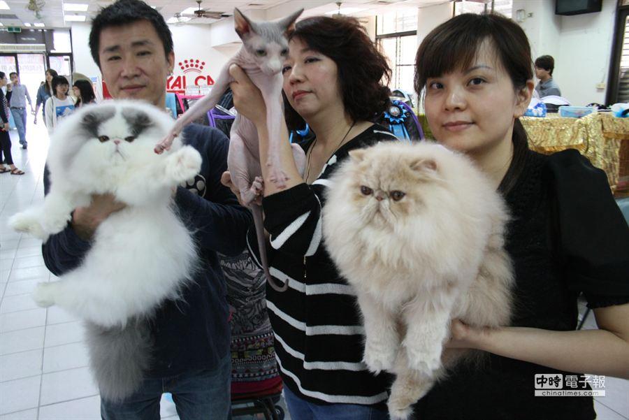 100隻貓咪參加選美貓展,裡面赫見無毛貓。(程炳璋攝)