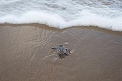 昆士蘭賞海龜 成熱門行程