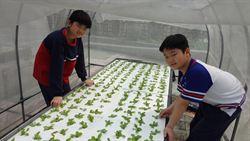 學童種水耕蔬菜 要幫獨老辦桌