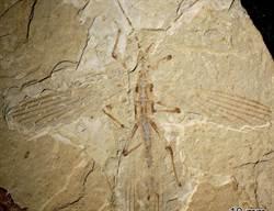 中國出土1.26億年前竹節蟲