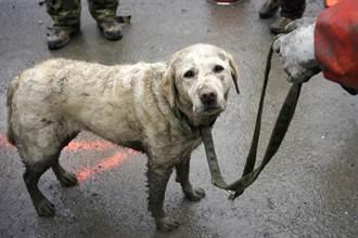 搜救犬動員 搶救美華盛頓州泥石流災民