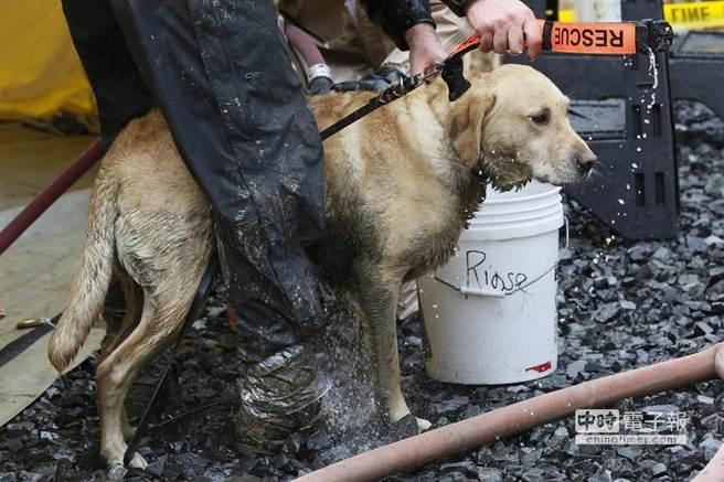 完成搜救任務後,搜救人員為搜救犬清洗。(取材自華爾街日報)
