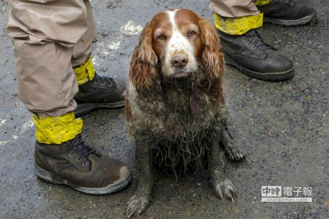 搜救犬為救人,渾身泥濘不堪。(取材自華爾街日報)