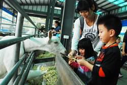 高市農村體驗 小朋友歡喜餵羊