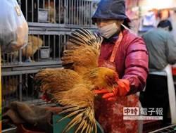 活禽市場無檢疫證明 商家:活著就行