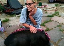 英寵物豬「好鬥」 寄放學校被殺掉