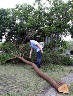大膽山老鼠 盜採墾管處樹木