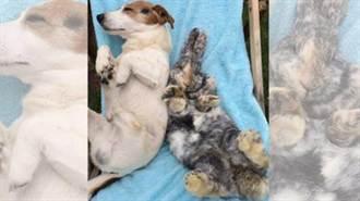 寵物狗和被救野兔成好友 形影不離