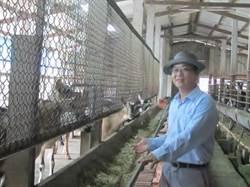 乳羊牧場轉休閒餐廳 口碑響