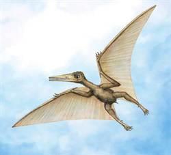 研究:最古老翼手龍來自中國  距今1.63億年