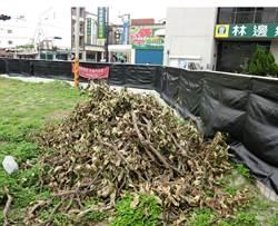 林邊海產街旁設垃圾場 居民不滿