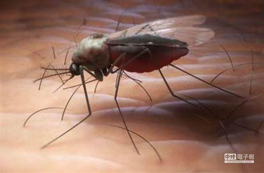 蚊子叮咬在夏天最惱人。(鳳凰網)