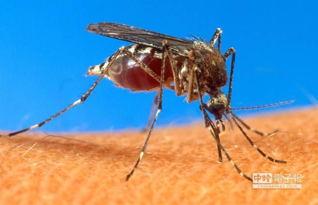 蚊子在夏天更猖狂。(美聯社)