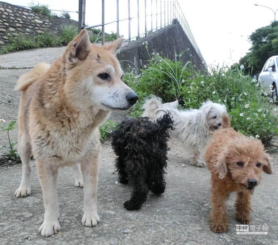 動物救援小組呼籲民眾「以認養代替購買」,杜絕繁殖場商機。(圖:台灣動物緊急救援小組提供)