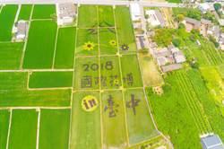 台中彩繪稻田 宣傳花博超吸睛