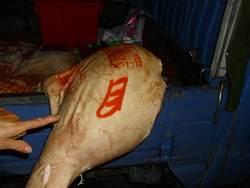 豬肉怪盜出沒 自撞電桿被逮