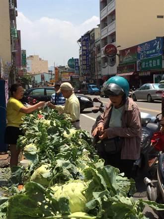 二林菜農 慨捐3000顆大頭菜義賣