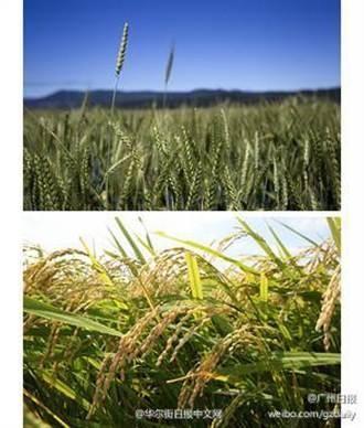 研究:吃麵的北方比吃米的南方易離婚