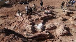 考古學家 發現史上未見最大恐龍