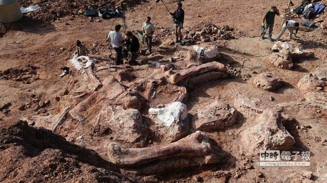 在阿根廷出土的恐龍遺骸化石,據信屬於泰坦巨龍類新發現物種。(摘自BBC網站)